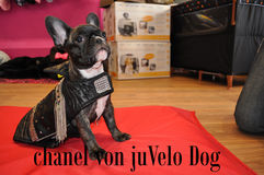 juVelo Dog Boutique